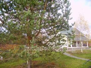 9 фото, арендовать коттедж в Лен. области, поселок Нагорное Выборгского района